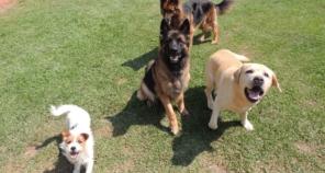 Foto de Hundeparadies Hospedagem e Recreação para Cães em Jundiaí, SP por Solutudo