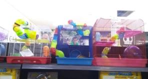 Foto de Família Pet - Loja 1 em Birigui, SP por Solutudo