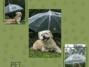 Guarda chuva para pets