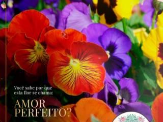AMOR PERFEITO - A ORIGEM DO NOME