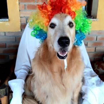 Turma Dog do Carnaval