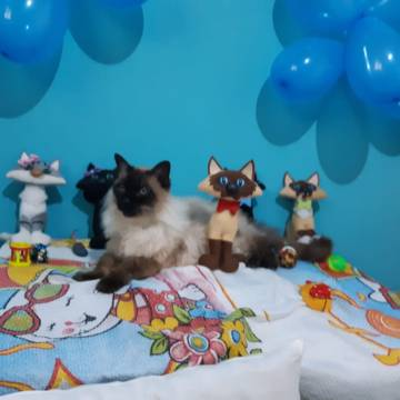 15 anos do Lilo Gato