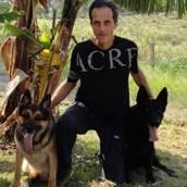 CURSO DE ADESTRAMENTO EM AMERICANA  em Americana, SP por Ateliê de Estética Animal Samuel Castro