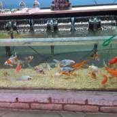 Peixes em geral