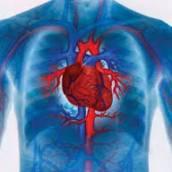 Serviços Fisioterapêuticos nas Áreas de Cardiorrespiratória