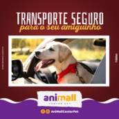 Transporte seguro para seu pet