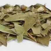 Eucalipto folha