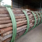 Eucalipto Citriodora Tratado - Repique, Palanque, Mourão e Poste  em Avaré, SP por Usina de Preservação de Madeiras Jatobá
