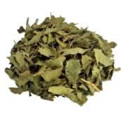 Chá de Espinheira Santa  em Americana, SP por Empório In Natura