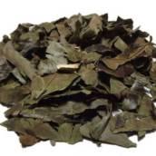 Chá Verde  em Americana, SP por Empório In Natura