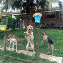 Cães de Porte Pequeno