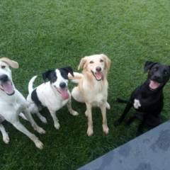 Cães de Porte Grande