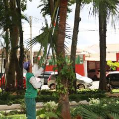 Coleta mecanizada de galhos de árvores e entulhos da construção civil