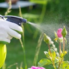 Controle de Pragas em Jardim