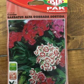 Comprar o produto de semente cravina barbatus em A Classificar em Botucatu, SP por Solutudo