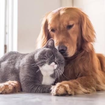 Comprar o produto de Antroposofia para Animais em Especialidades em Atibaia, SP por Solutudo