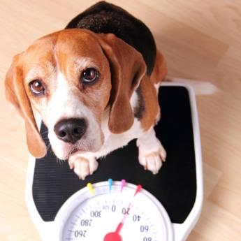 Comprar o produto de Endocrinologia para Animais em Especialidades em Atibaia, SP por Solutudo