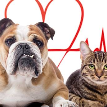 Comprar o produto de Cardiologia para Animais em Especialidades em Atibaia, SP por Solutudo