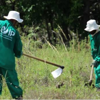 Comprar o produto de Manutenção de Áreas Verdes em Outros Serviços em Aracaju, SE por Solutudo
