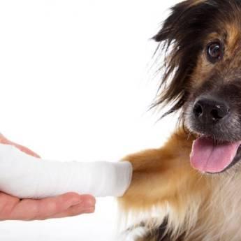 Comprar o produto de Ortopedia em Pet Shop pela empresa Univet - Clínica Veterinária e Pet Shop em Aracaju, SE por Solutudo