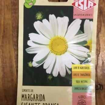 Comprar o produto de semente margarida branco  em A Classificar em Botucatu, SP por Solutudo