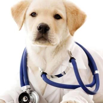 Comprar o produto de Clínica Veterinária em Animais em Jundiaí, SP por Solutudo