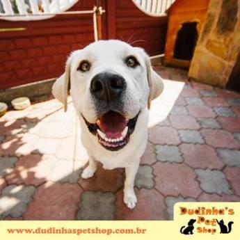 Comprar o produto de Banho & Tosa em Animais em Jundiaí, SP por Solutudo