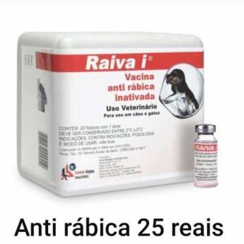 Comprar o produto de Vacina Anti Rábica  em A Classificar em Botucatu, SP por Solutudo