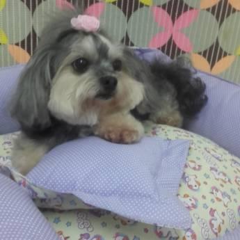 Comprar produto Pet Shop  em Pet Shop pela empresa Clínica Veterinária Planeta Animal em Marília, SP
