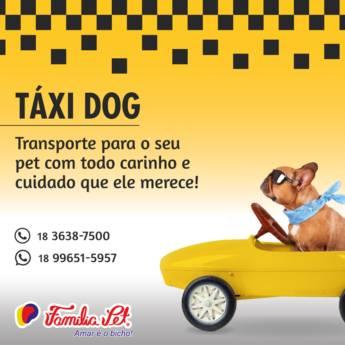 Comprar o produto de Táxi Dog em Transporte em Birigui, SP por Solutudo