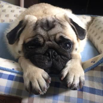 Comprar o produto de Hospedagem de cães de pequeno porte em Hotel e Canil em Jundiaí, SP por Solutudo