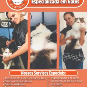 Comprar o produto de Banho e Estética Especializada em Gatos  em Pet Shop em Jundiaí, SP por Solutudo