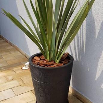 Comprar produto Jardim em Vasos em Outros Serviços pela empresa Atelier de Paisagismo e Arte Floral em Botucatu, SP