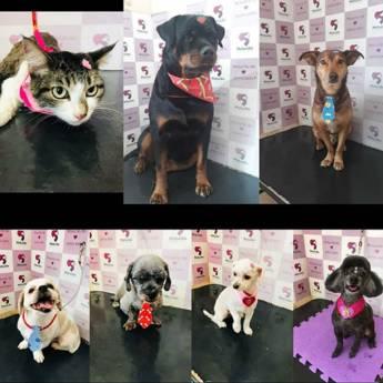 Comprar produto Banho e Tosa  em Pet Shop pela empresa Clínica Veterinária Malucão em Itu, SP