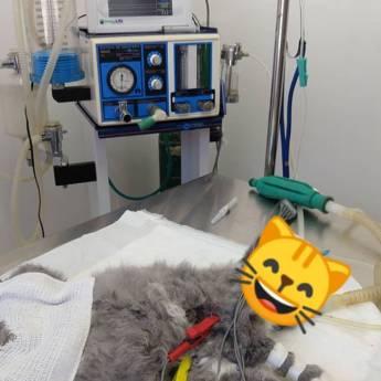 Comprar produto Consultas em Pet Shop pela empresa Clínica Veterinária Malucão em Itu, SP