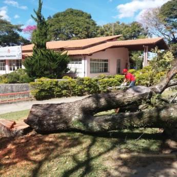 Comprar o produto de Corte e remoção de árvore em Outros Serviços em Atibaia, SP por Solutudo