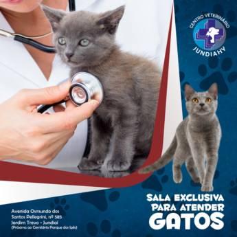 Comprar o produto de Atendimento para gatos em Veterinário em Jundiaí, SP por Solutudo