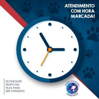 Comprar o produto de Atendimento veterinário em Veterinário em Jundiaí, SP por Solutudo