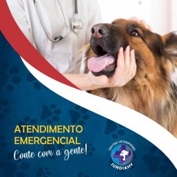 Comprar o produto de Atendimento emergencial pet em Veterinário em Jundiaí, SP por Solutudo