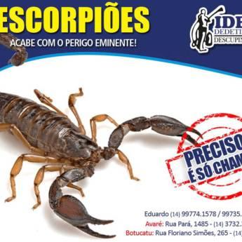 Comprar o produto de Dedetização de Escorpiões em Outros Serviços pela empresa Ideal Dedetizadora em Botucatu, SP por Solutudo