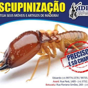 Comprar produto Descupinização em Outros Serviços pela empresa Ideal Dedetizadora em Botucatu, SP