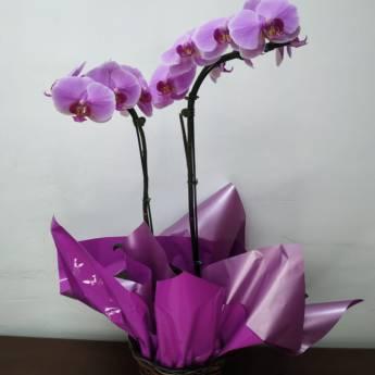 Comprar produto Arranjos de Orquídeas em Arranjo de Flores pela empresa Carol Flores e Cestas em Jundiaí, SP
