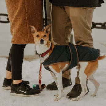 Comprar o produto de KNOW-HOW DOG FAMILY em Adestramento em Aracaju, SE por Solutudo