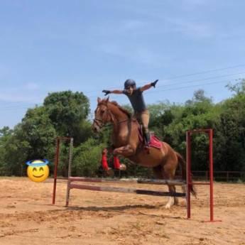 Comprar o produto de Hipismo Clássico  em Academias e Esportes pela empresa Horsinho Centro Equestre em Foz do Iguaçu, PR por Solutudo