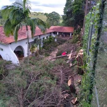 Comprar produto Corte de árvore e limpeza de terreno em Jardinagem pela empresa 3 Verde Jardinagem em Botucatu, SP