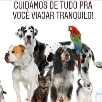 Comprar o produto de Pet Sitter em Creche Pet em Botucatu, SP por Solutudo