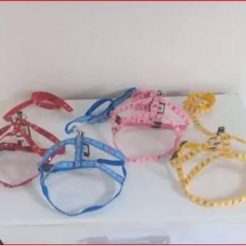 Comprar o produto de Coleiras para Cachorro em Coleiras em Botucatu, SP por Solutudo