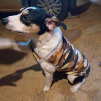 Comprar produto Roupinha para Cachorro em Artigos Pets pela empresa Carrocinha Pet  em Botucatu, SP
