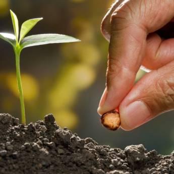 Comprar produto Sementes em Produtos Agropecuários pela empresa Casa da Terra em Botucatu, SP