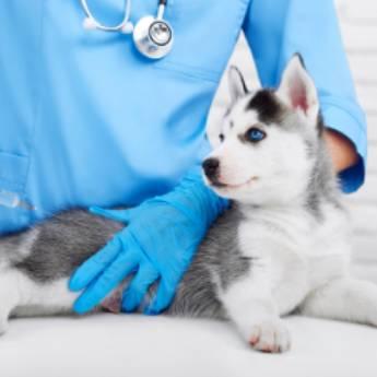 Comprar o produto de Vacinação - PrimeVet Clínica e Estética Animal em Clínicas Veterinárias em Botucatu, SP por Solutudo